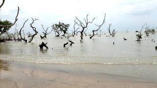 incredible  Bichitrapur Mangroves in ODISHA near Digha  Bichitrapur Echo tourism