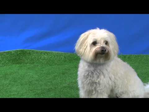 Adorable Riley auditioned for Talent Hounds