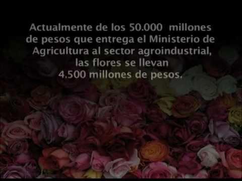 Sector Floricultor en Colombia - Situación - Central Unitaria de Trabajadores
