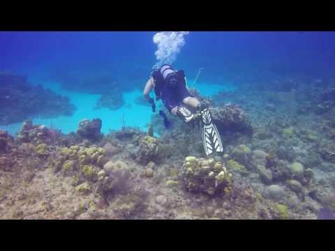 Copy of Diving in Guantanamo Bay Cuba