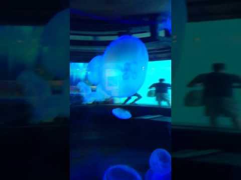 Jelly fish ushaka Marine world Durban South Africa