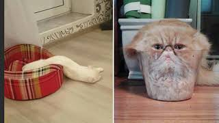 Смешные кошки до слез Смешное видео про котов - коты это жидкость
