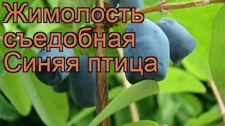 Жимолость съедобная Синяя птица (lonicera edulis) ???? обзор: как сажать, саженцы жимолости Синяя птица