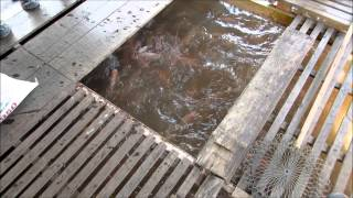Fish Farm Vietnam