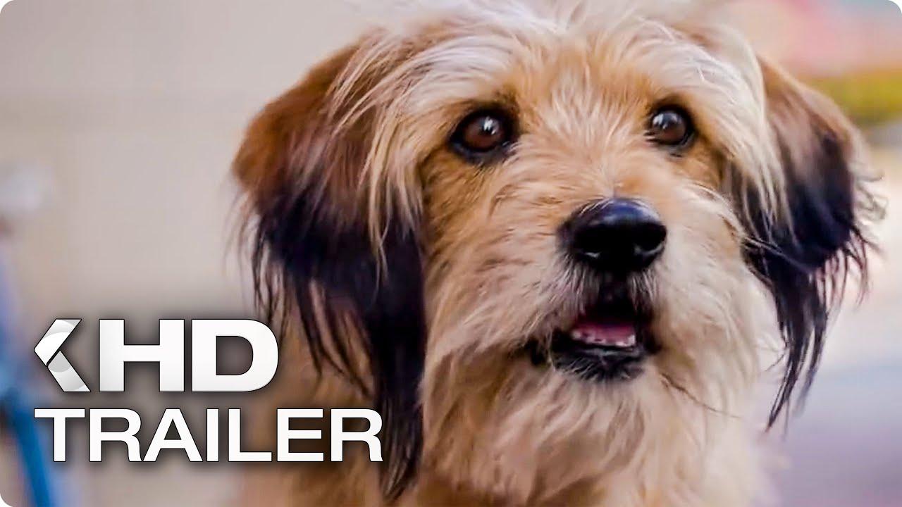 BENJI Teaser Trailer (2018) Netflix