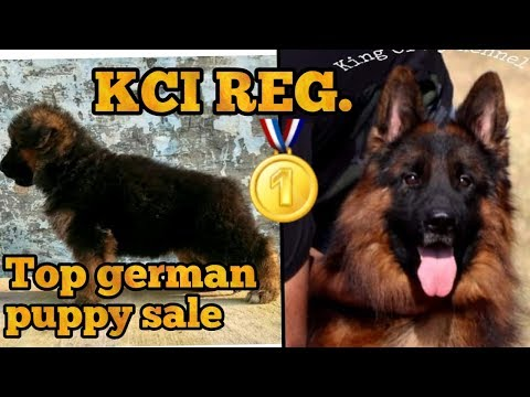 How to Check Purity of German Shepherd Dog Puppy in Urdu