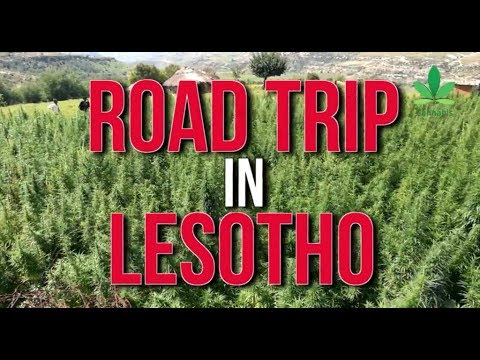 Road Trip In Lesotho: Africa's First Legal Cannabis Cultivat