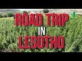 Road Trip In Lesotho: Africa's First Legal Cannabis Cultivation | Cannabis News Network Mp3