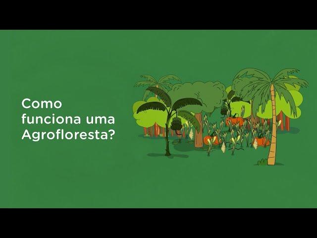 O que é Agrofloresta
