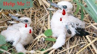 Bắt Được Chim Đại Bàng Ma Quỷ Ở Khu Nghĩa Trang Cổ . Eagle Catch Birds