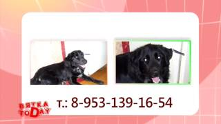 Потерялся пес. Вятка Today 22.09.2014(, 2014-09-22T19:58:49.000Z)