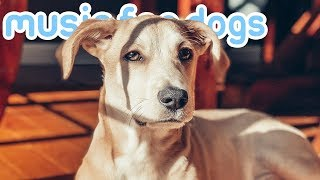 The BEST Music for Anxious Dogs and Puppies! Help Your Dog Relax!