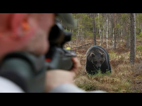Shooting bear, Exclusive targets, Sauer 303 - YouTube