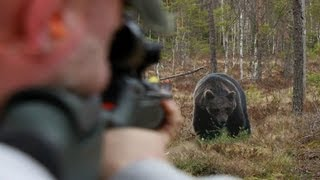 Repeat youtube video Shooting bear, Exclusive targets, Sauer 303