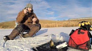 Підлідний лов окуня, Синежаберного & краппі з воском черв'яків