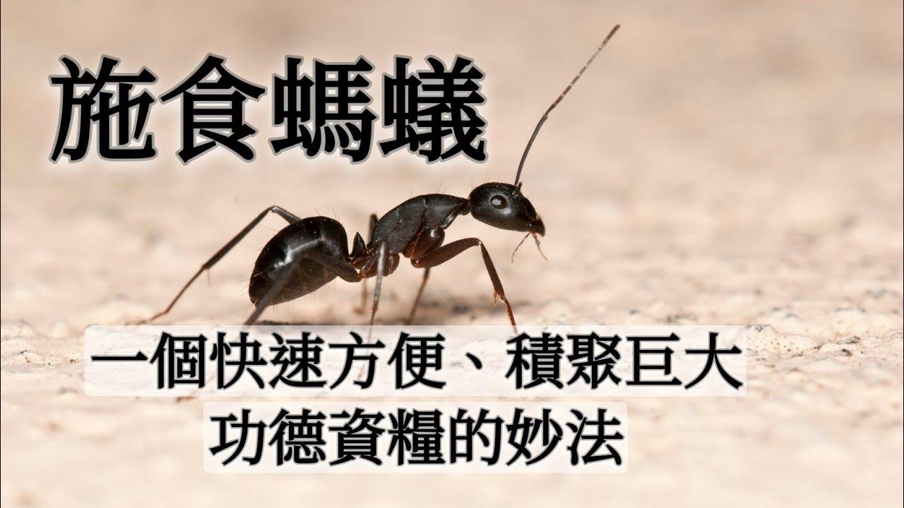 施食螞蟻!一個快速方便又可積聚巨大功德資糧的妙法@溢彩堂