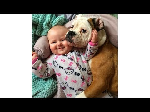 Adorable Dogs Take Care Babies 🐕🐕🐕 Funny Babies and Pets
