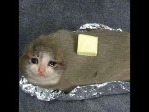 sad cat meme youtube