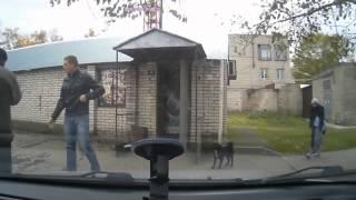 Бегущие собаки сбили прохожего с ног