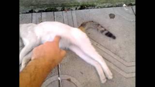 Жара & Котэ(28.07.2011г. в г. Ессентуки было ПРОСТО нечем дышать! P.S. никогда не прохожу мимо кошки/собаки, не погладив ее...., 2011-07-29T06:36:08.000Z)