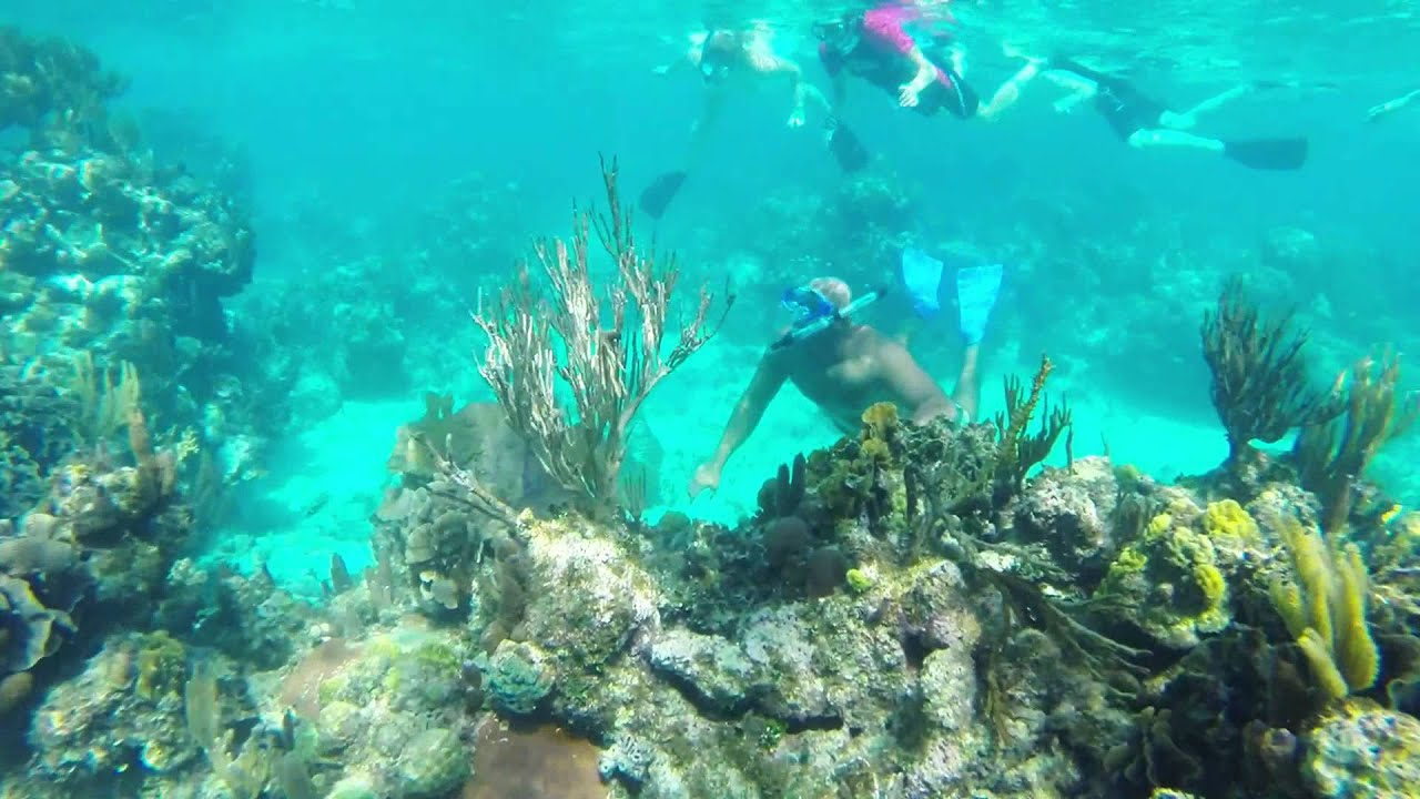 Roatan West Bay Beach Snorkeling