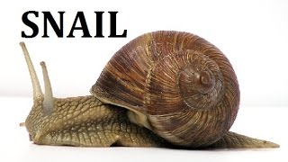 Snail Snails Land Garden Pet Facts for Kids Children Documentary Gastropod Molluscs Slug Animals