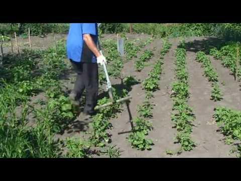 видео: Борьба с сорняками. Быстрая прополка междурядья картофеля
