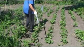 Борьба с сорняками׃  Быстрая прополка междурядья картофеля