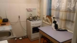 Коты странно себя ведут