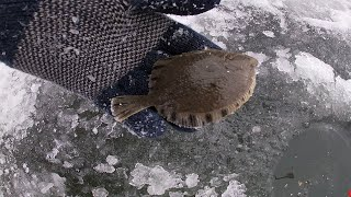 ЗИМНЯЯ РЫБАЛКА 1 НАВАГА ПРИМОРЬЕ МИНИКАМБАЛА ICEFISHING 1 TINY FLOUNDER
