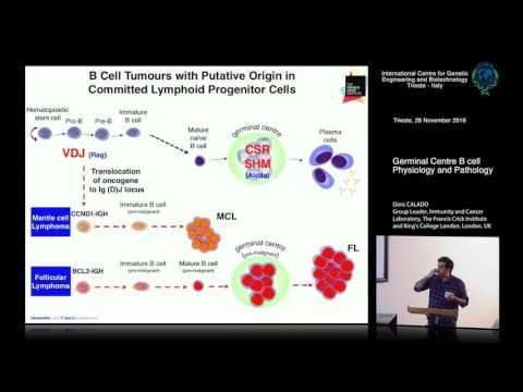 D. Calado - Germinal Centre B cell Physiology and Pathology