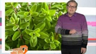 видео Эфирное масло майорана