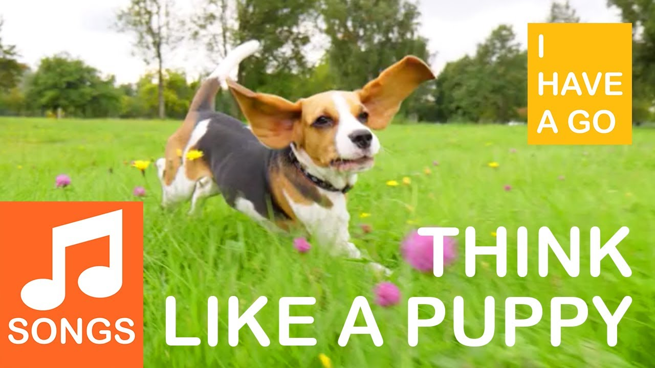 Think Like a Puppy | The anti bullying song about respect, tolerance and acceptance | I HAVE A GO