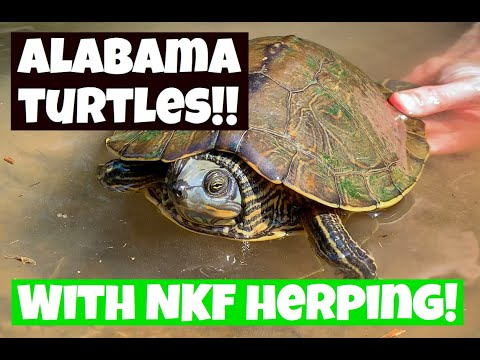 How To Find Turtles In Alabama! Do We Succeed??
