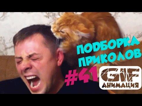 гиф гифки (гифки - ПРИКОЛЬНЫЕ gif анимашки) / смешные