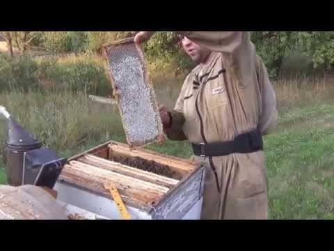 Пчеловодство видео 2015 год