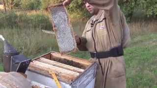 Пчеловодство видео  Отбор меда 7 августа  Beekeeping video  Selection of honey on 7 August(В данном видео мы производим отбор гречишного меда. In this video, we produce a selection of buckwheat honey. Наша партнерская прогр..., 2015-08-17T13:10:41.000Z)