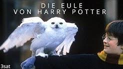 Die EULE von HARRY POTTER - 3sat Doku (Deutsch - Germany)