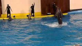 Dolphin show in jeddah