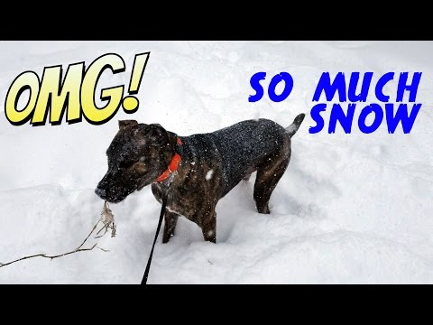 Dog is Enjoying Snow While Winter Storm Stella Hammers the Northeast - March 2017