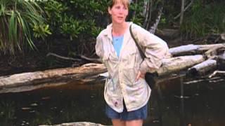 Kdo-přežije-Borneo-I-(02)