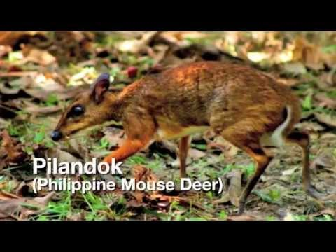 philippine wildlife