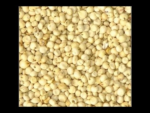 Stay fit in 2 mins : Sorghum(Jowar) helps in controlling Diabetes and Cholesterol