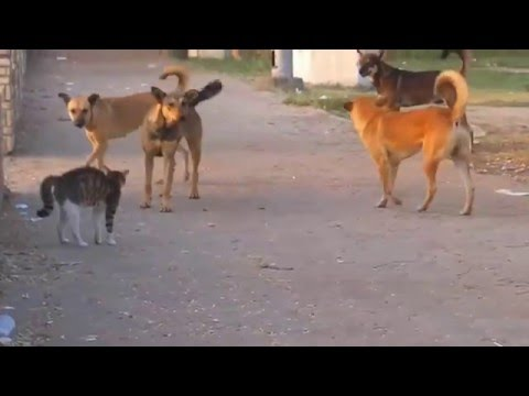cat-vs-dogs-street-fight-kung-fu