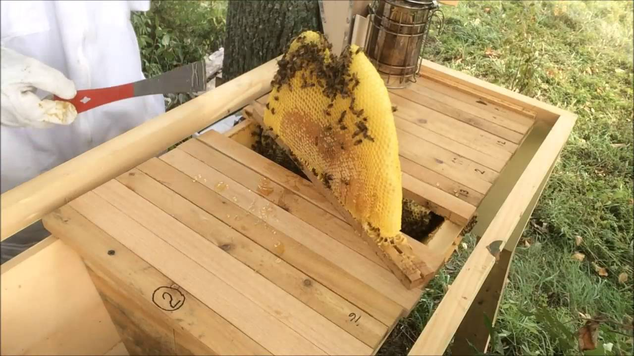 How to straighten top bar combs - Queen Victoria Hive Sept ...