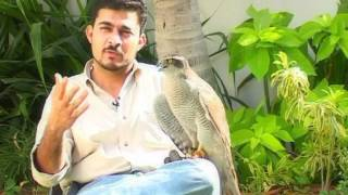 Falconry in Pakistan, an introduction.