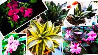 100 espécies de plantas lindas e exóticas para fazer seu jardim explodir de flores e folhas