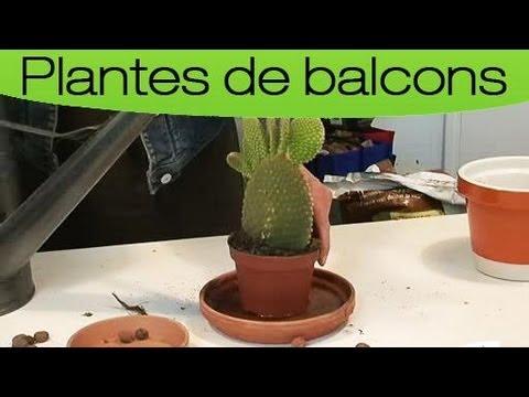 Comment entretenir un cactus ?