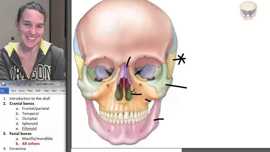 8 facial bones - youtube, Human Body