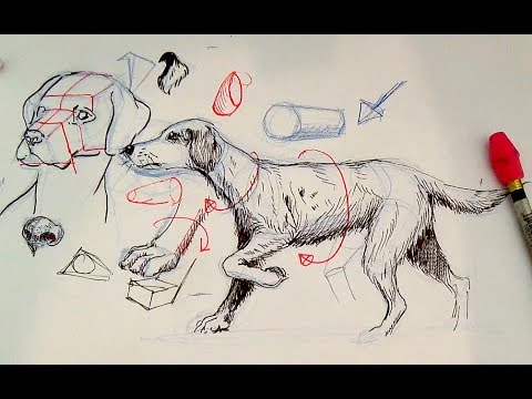 Pen and Ink Drawing Tutorials | How to draw a dog